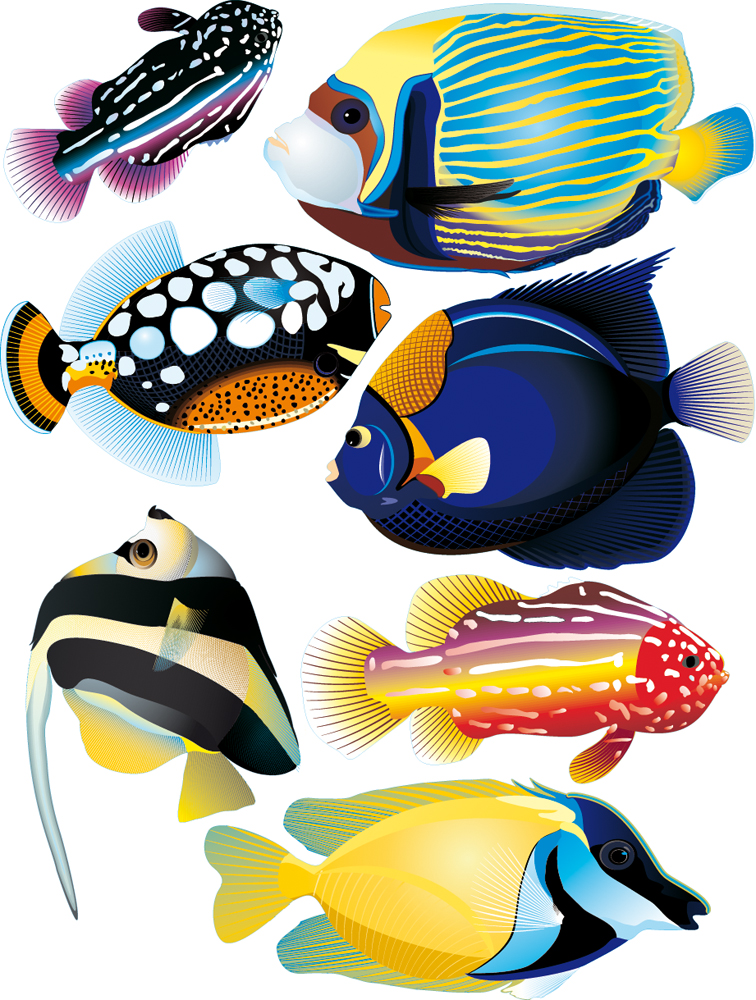 wallstickers folies fish set wall stickers fish tales wall sticker set